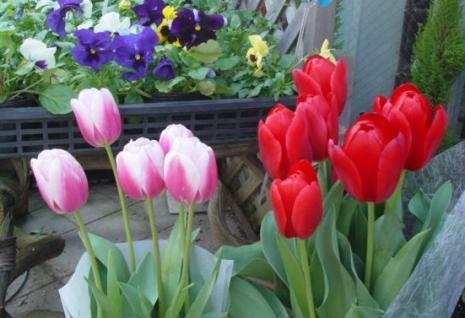 花屋さんのチューリップ