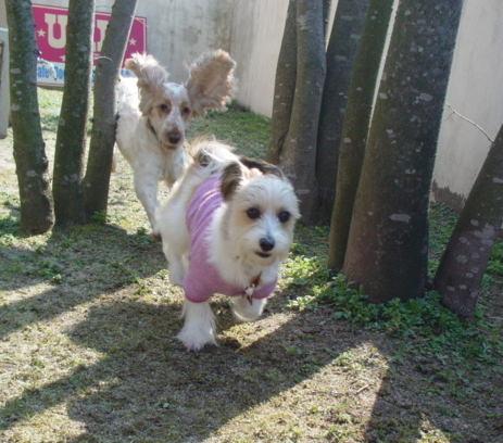 走る犬たち