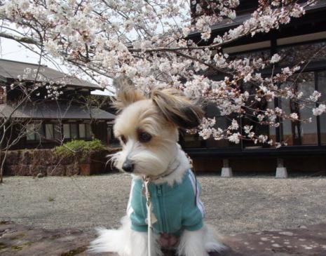桜とリプリー①