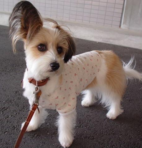 オンナっぽい犬