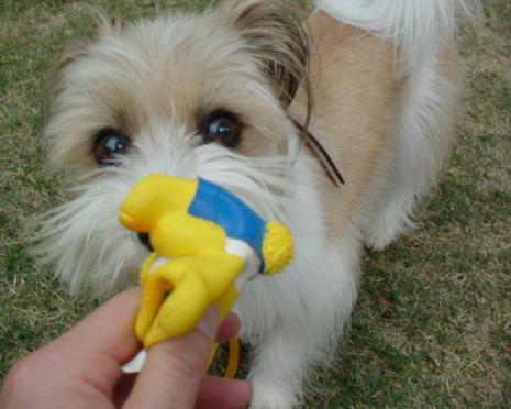 おもちゃと遊ぶ
