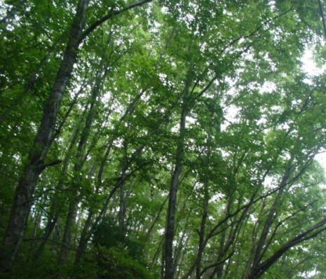 青木湖周辺・木立