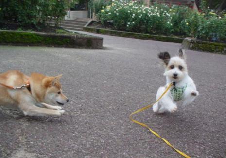 遊ぶ犬たち。