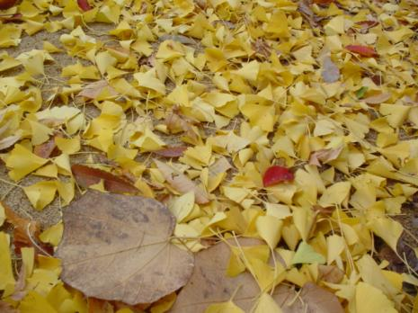 黄色の地面