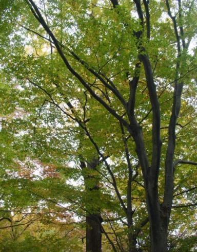 春日神社の樹々