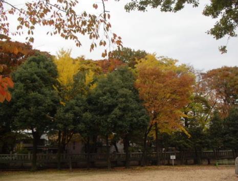 中村神社境内の木々