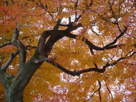 宮川沿いの紅葉