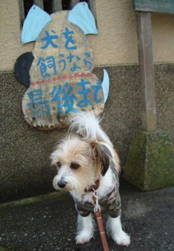 犬のカンバン