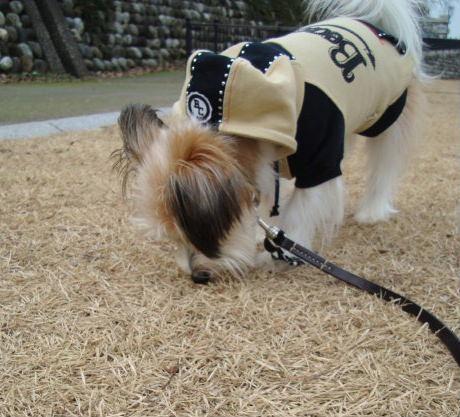 かぎまわる犬