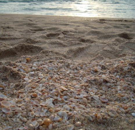 貝寄せの浜