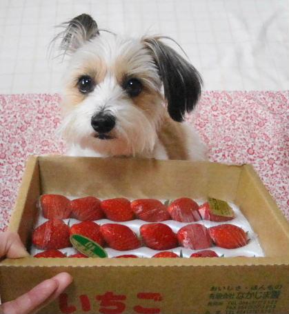 イチゴとリプリー