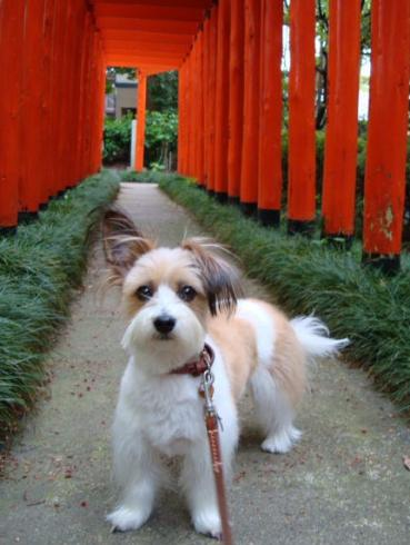 春日神社の赤い鳥居