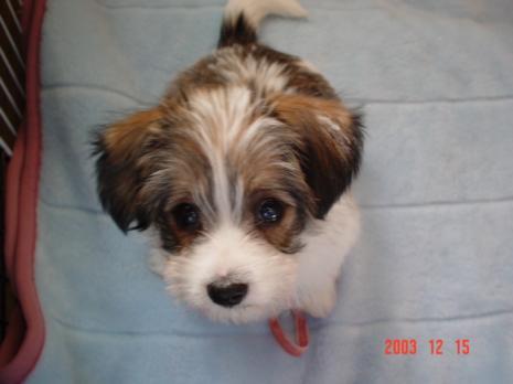 リプリー犬 2ヶ月。