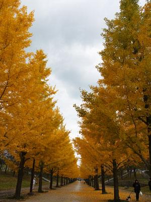 2011_11_03_15.jpg