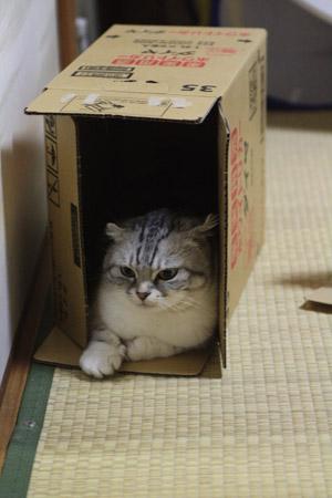 箱箱。あーおちつく。