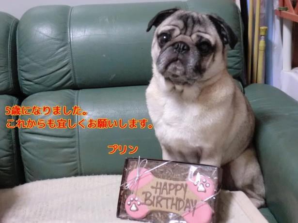 purin誕生日