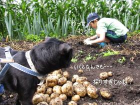 IMG_20090725__08.jpg
