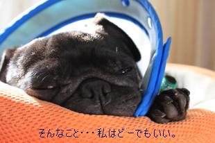 IMG_20111105__06.jpg