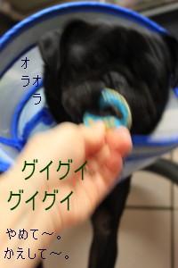 IMG_20111210__06.jpg