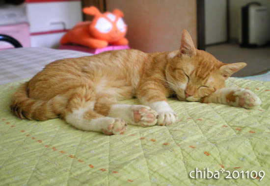 chiba11-9-03.jpg