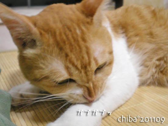 chiba11-9-111.jpg