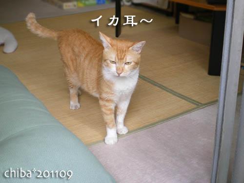 chiba11-9-117.jpg