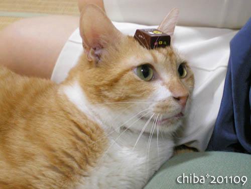 chiba11-9-149.jpg