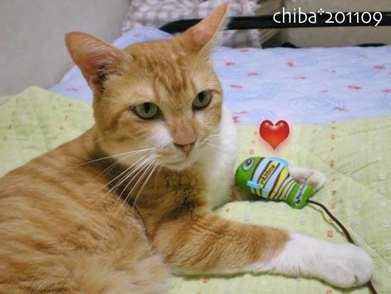 chiba11-9-53.jpg