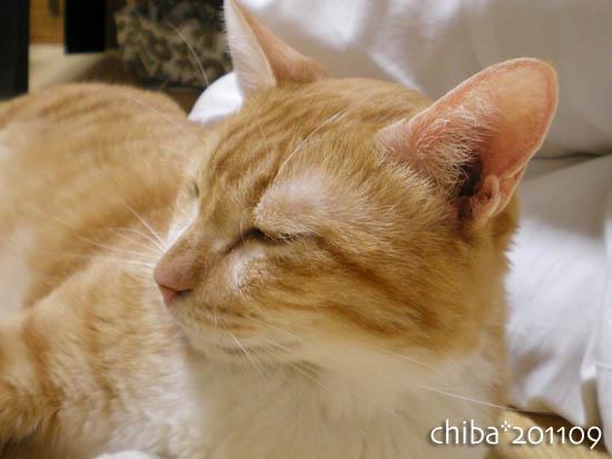 chiba11-9-72.jpg