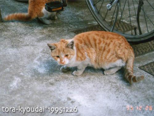 tora-kyoudai02.jpg