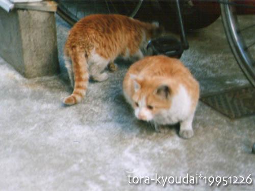 tora-kyoudai03.jpg