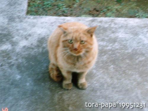 tora-papa01.jpg