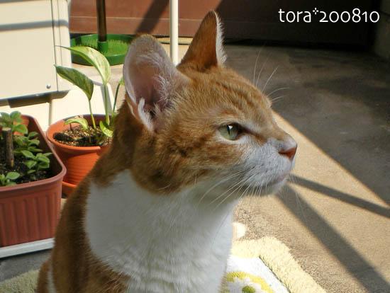 tora08-10-124.jpg