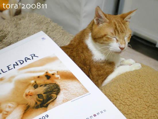 tora08-11-03.jpg