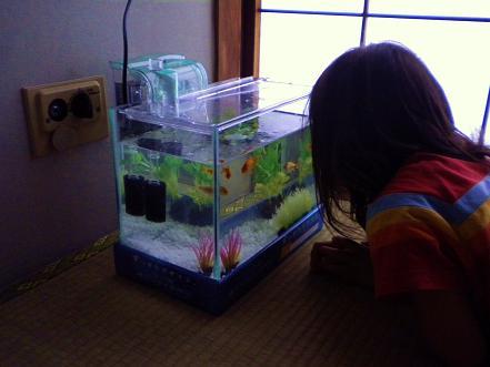 001金魚