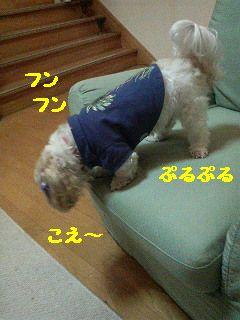 200710302224001.jpg