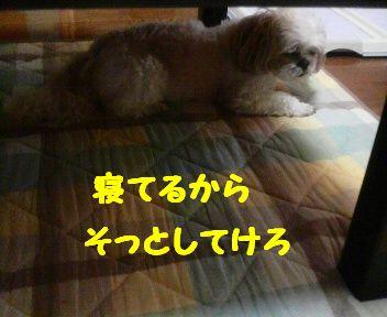 2008061918260000.jpg
