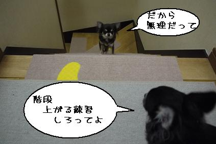 1_20111130221109.jpg