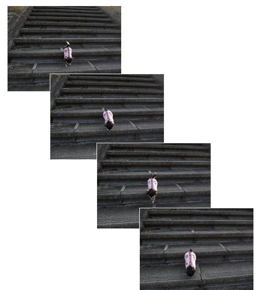 ティニー階段↓