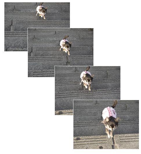 ティニー階段↑