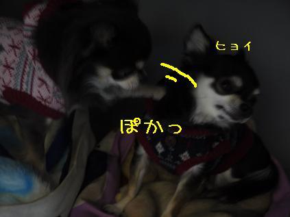 4_20120126101826.jpg