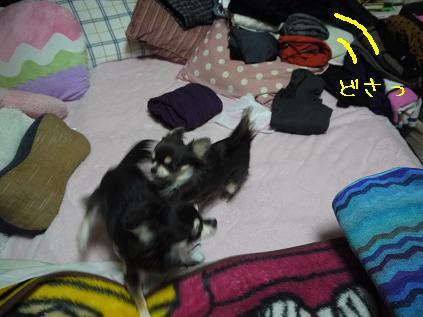 6_20120124141036.jpg