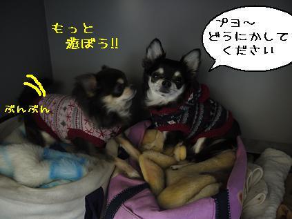 7_20120126101855.jpg