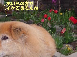 DSCN0103.jpg