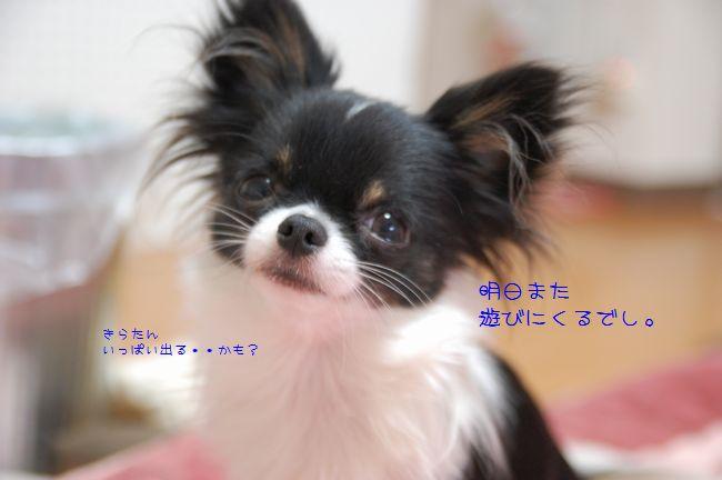 008_20090114210845.jpg