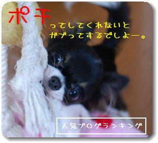 014_20081020213343.jpg