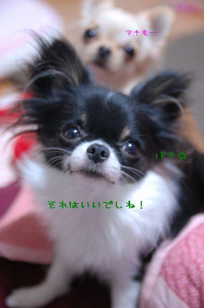 015_20090202213617.jpg