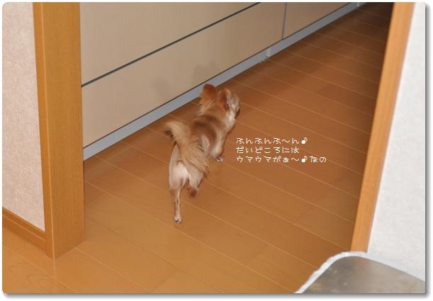 022_20090516210604.jpg
