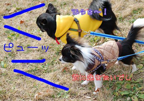034_20081205205046.jpg