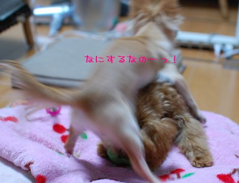 040_20081022213845.jpg